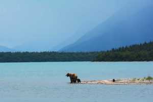 Alaska the land of bears and ices