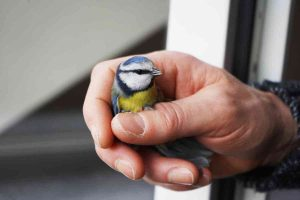 What to do with an injured bird